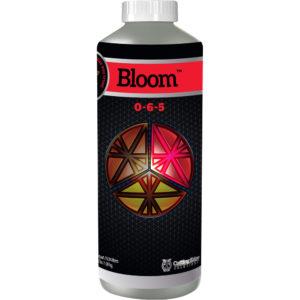 1-Qt-Bloom.jpg